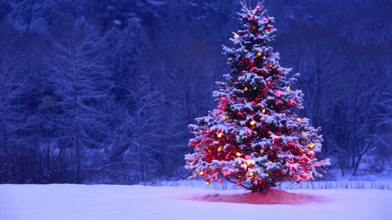 Christmas-Tree-Snow-Forest-720x1280