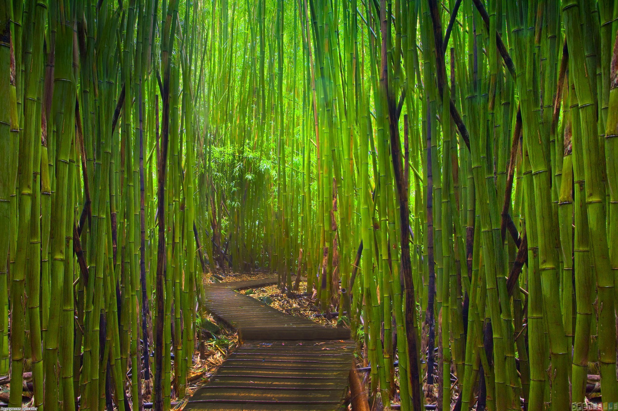 bamboo_forest_3_2000x1333