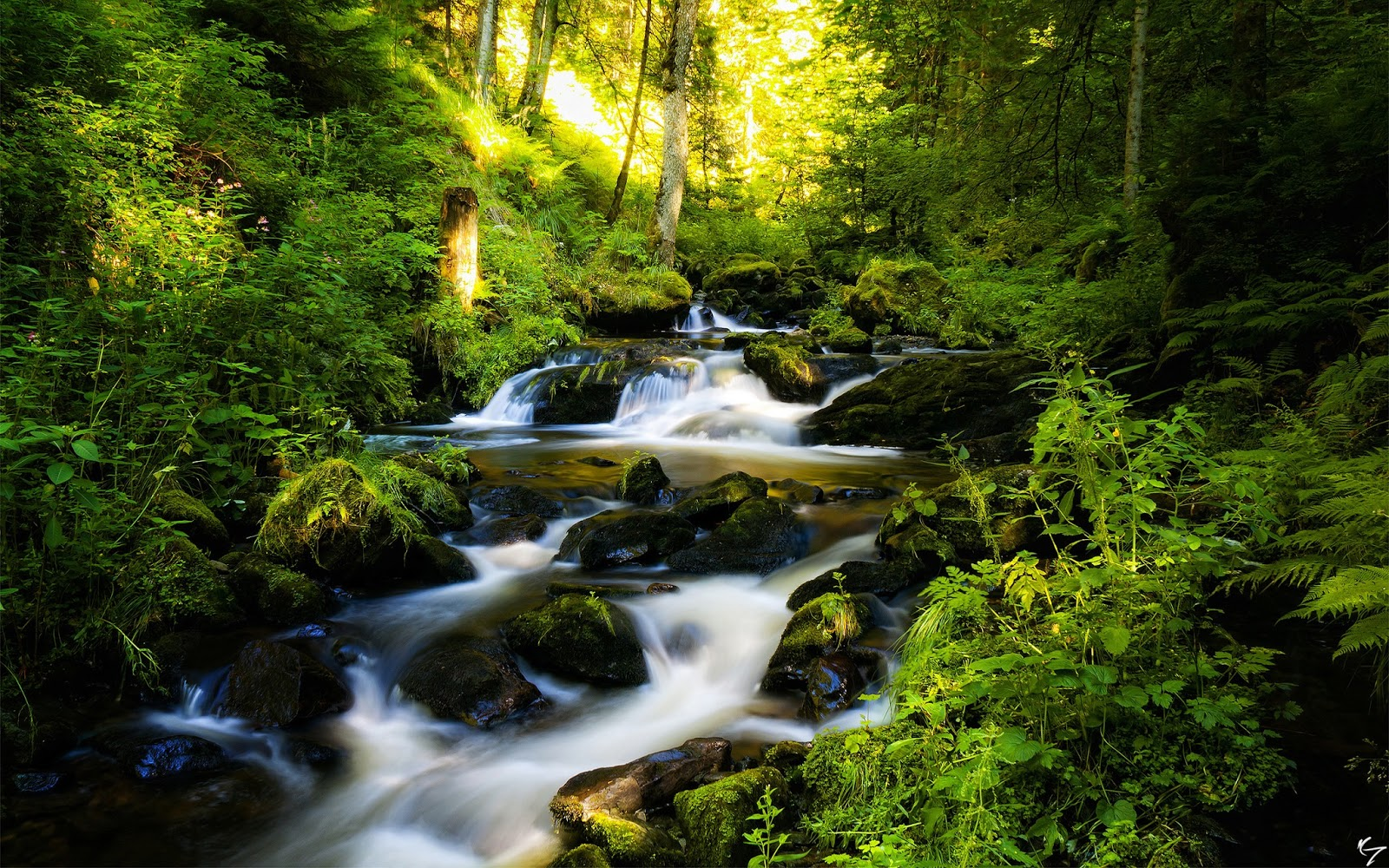 black_forest_in_germany-wide