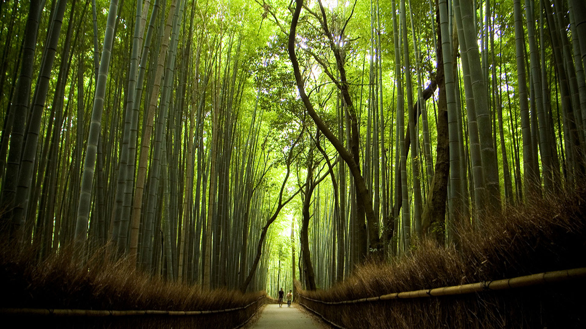 image-sagano-bamboo-forest-is-beautiful-whistling