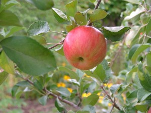 nature-september-orchard-036