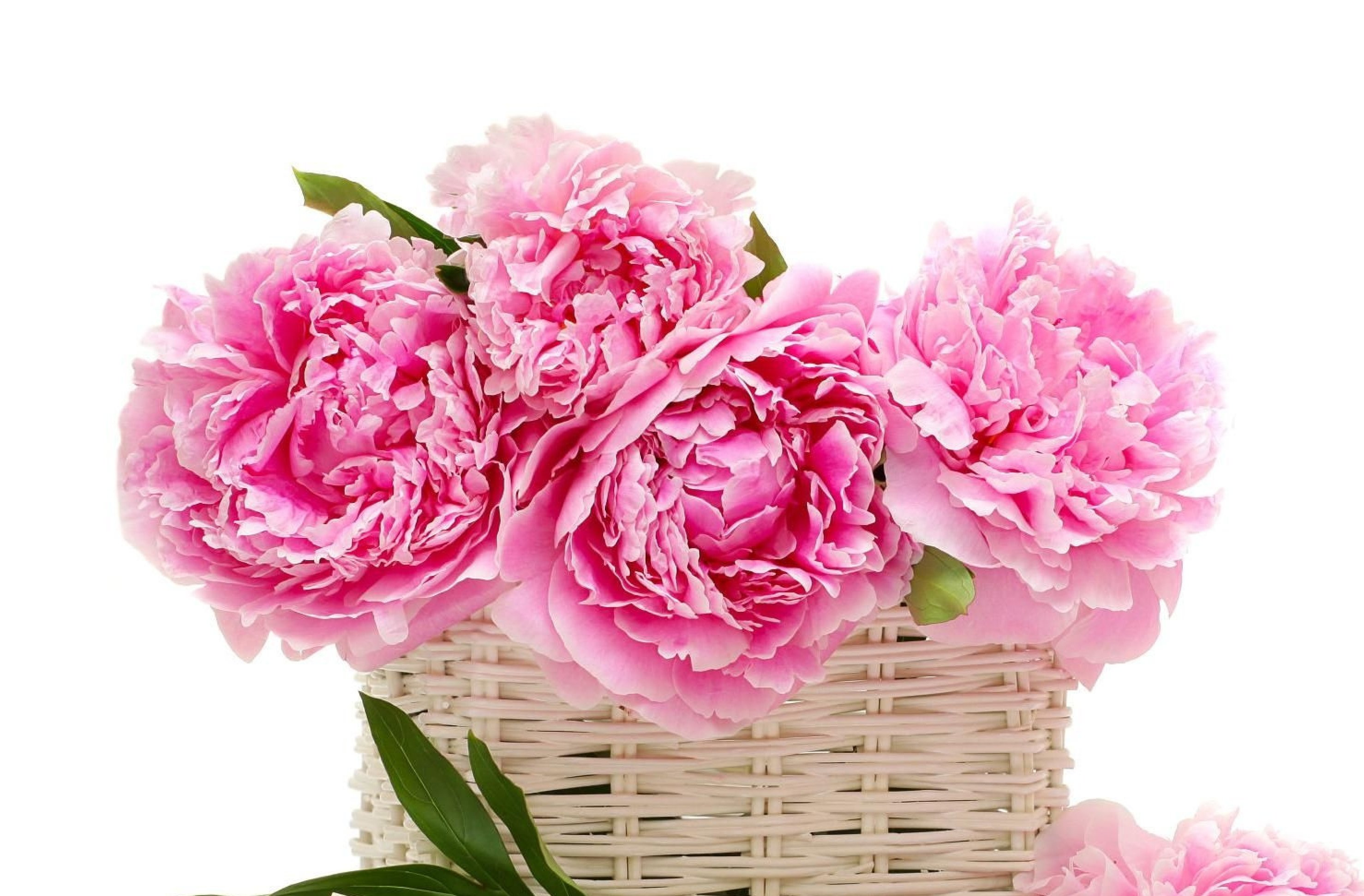 rsz_peonies_flower_basket_leaf_pencils_crayons_note_love_recognition_20651_3840x2160