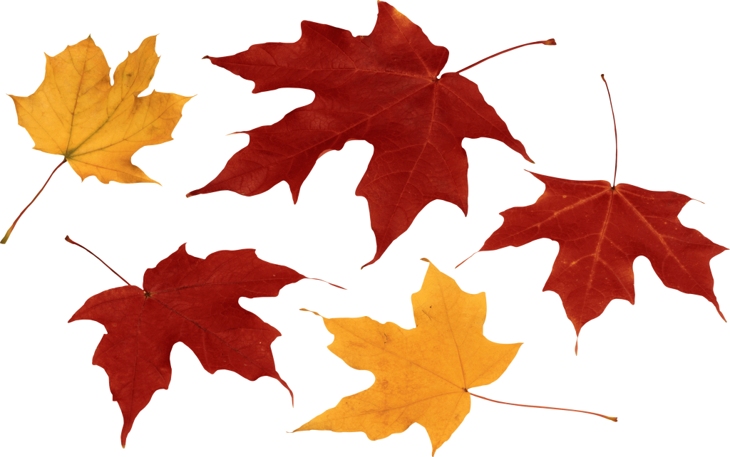 12-autumn-png-leaf